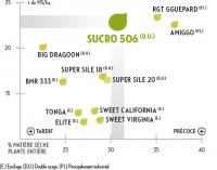 productivite-sucro506