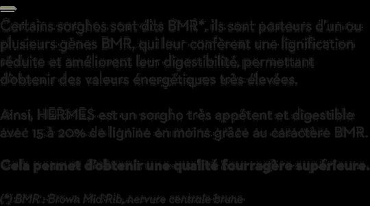 Une qualité fourragère supérieure grâce au caractère BMR