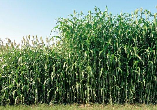 Biomass 133