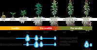 RéussirGrain-Irrigation2020